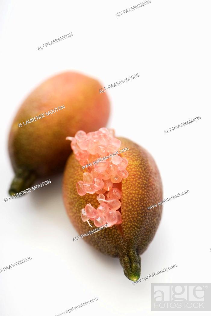 Stock Photo: Australian finger lime Citrus australasica.