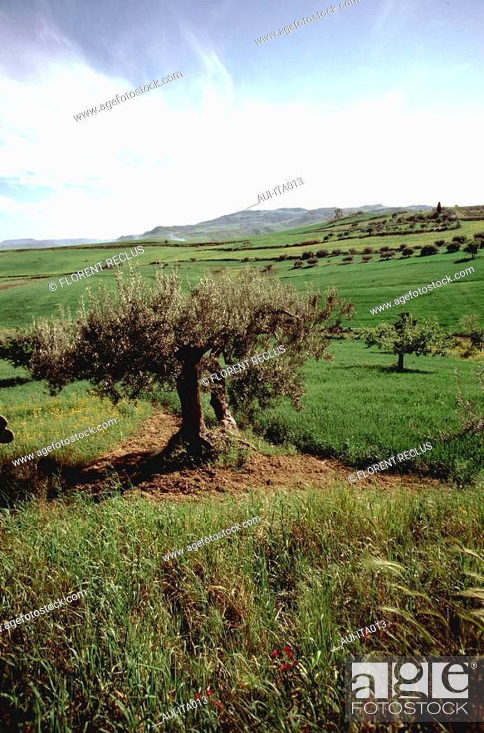 Stock Photo: Italy - Sicily - Enna Near.