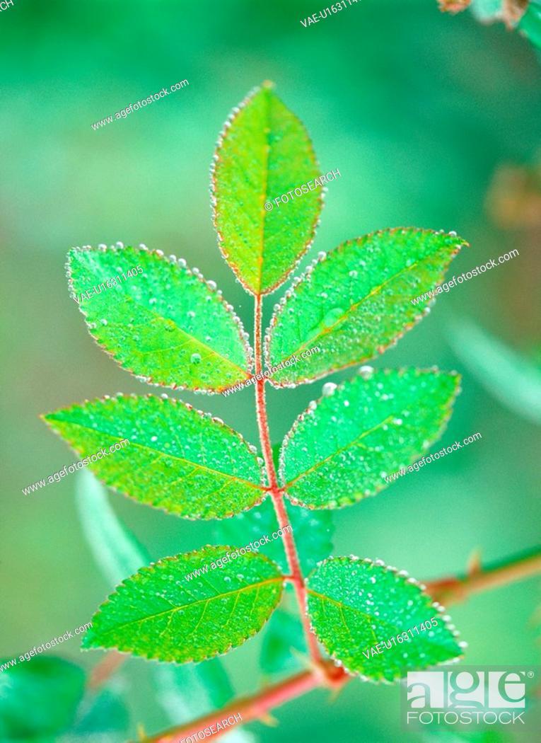 Stock Photo: waterdrop, leaf, plants, plant, film.