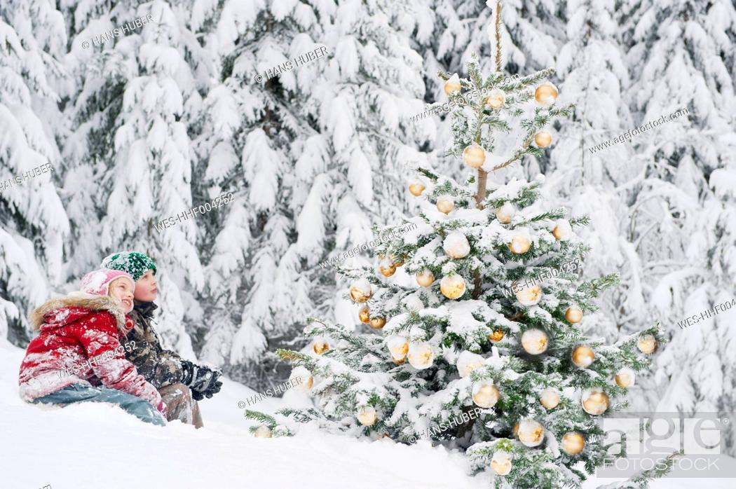 Stock Photo: Austria, Salzburg County, Boy and girl watching christmas tree in snow.
