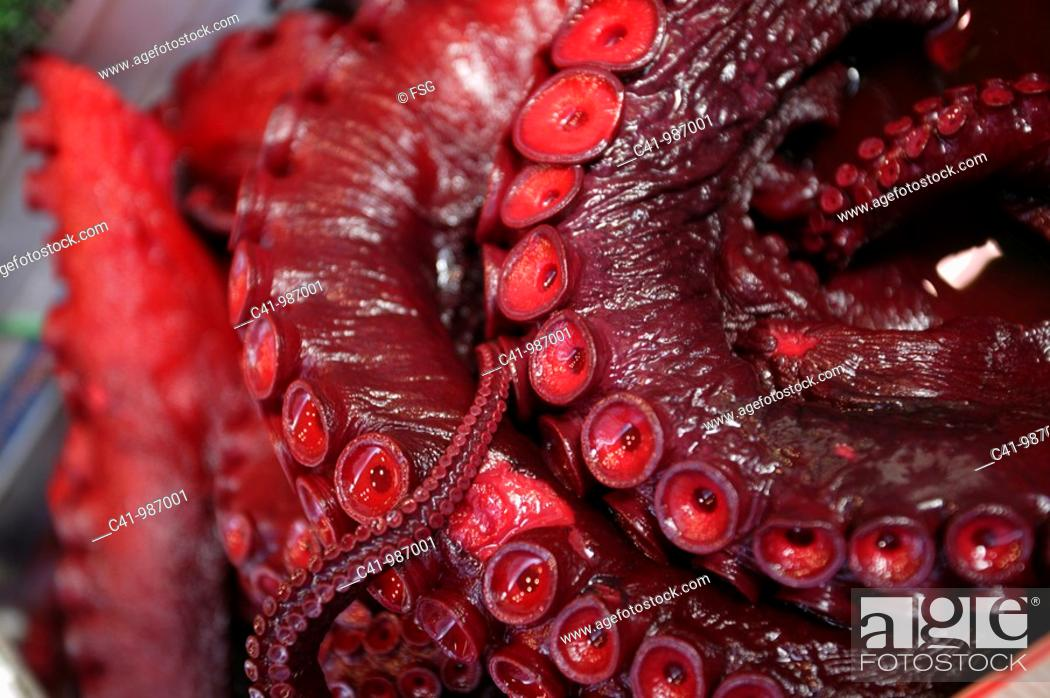 Stock Photo: Squid at Tsukiji fish market, Tokyo, Japan.