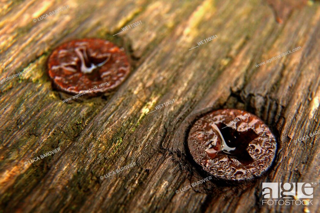 Stock Photo: Two rusted screws on a bench.