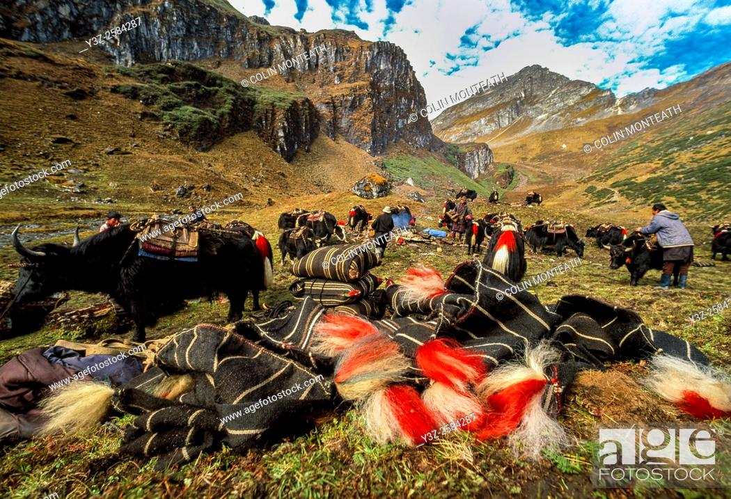 Imagen: Loading yak caravan, preparing to cross Tamplela Pass, 4550m, Snowman trek, northern Bhutan.