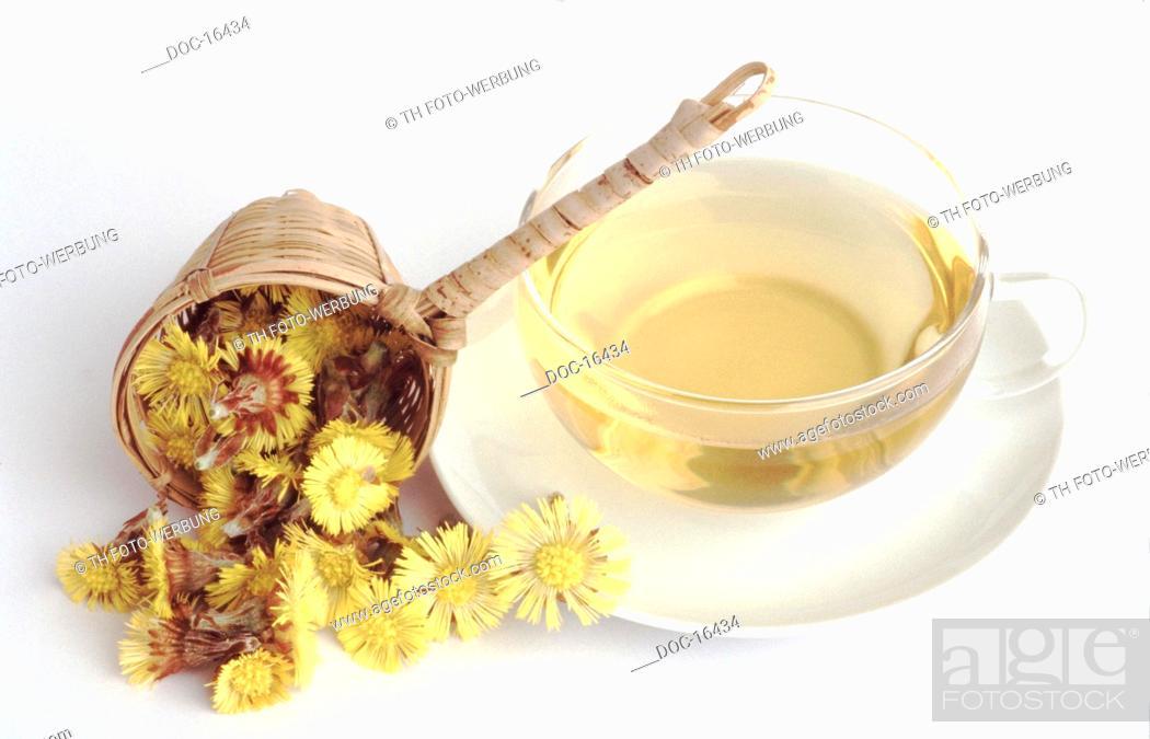 Imagen: Tussilago farfara - Coltsfoot tea - medicinal tea -.