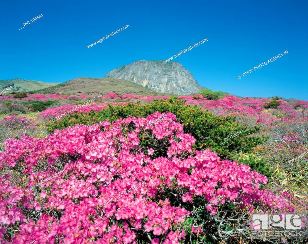 Mt Hallasan National Park Jeju Island Korea Stock Photo Picture And Rights Managed Image Pic Pic 108541 Agefotostock