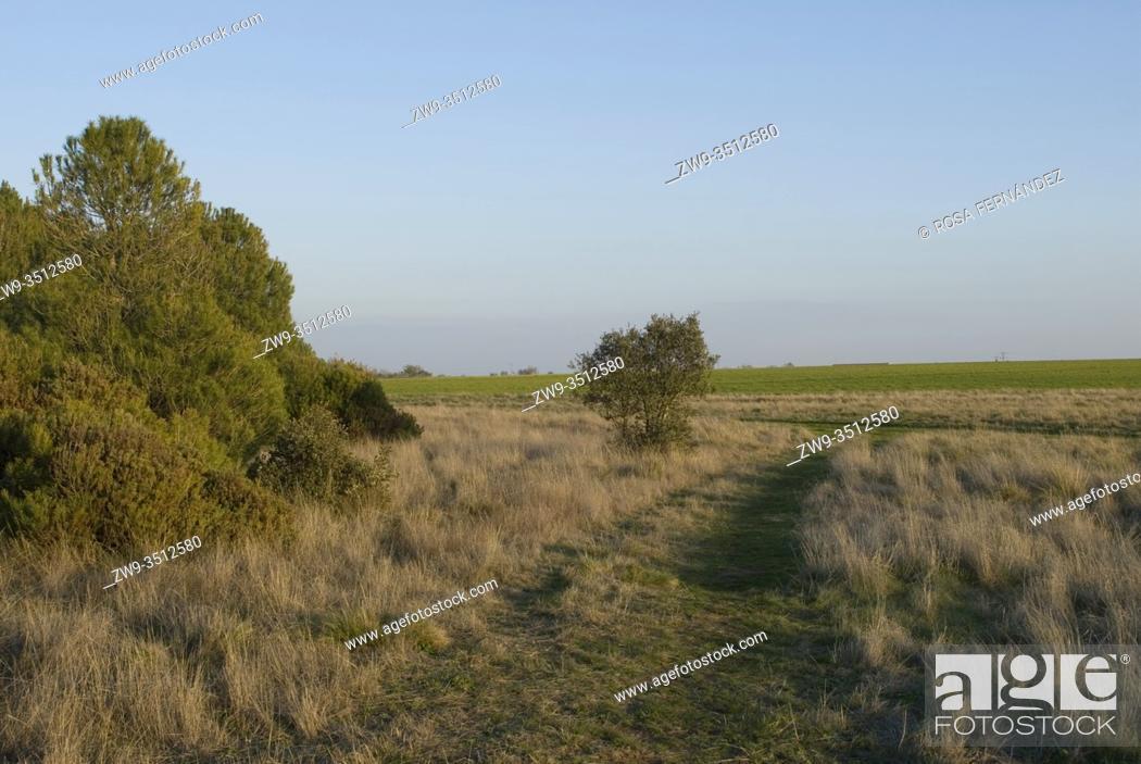 Photo de stock: Grassland near Puebla de Beleña, at Uceda country, province of Guadalajara, Castilla La Mancha, Spain.