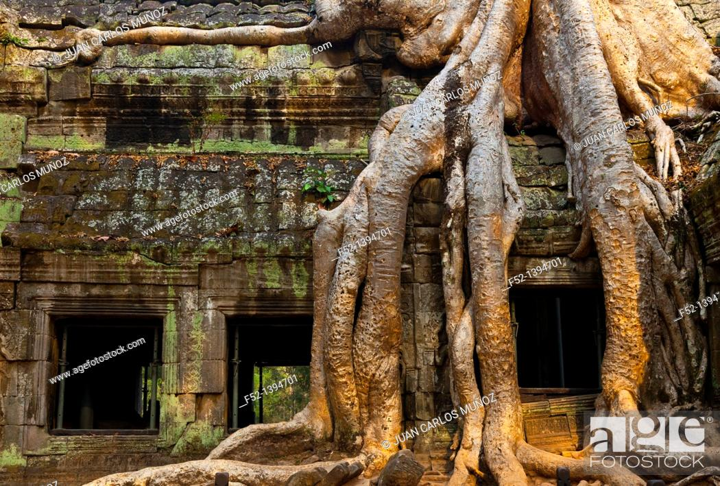 Stock Photo: Ta Phrom Temple  Angkor  Siem Reap town, Siem Reap province  Cambodia, Asia.