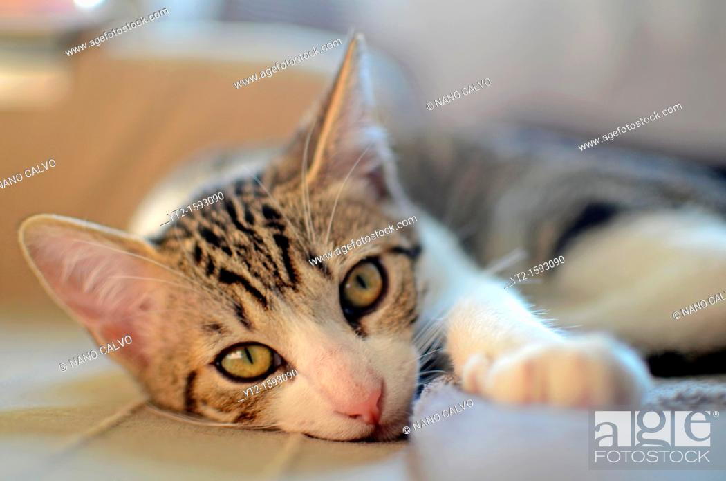 Stock Photo: Cute kitten at home.