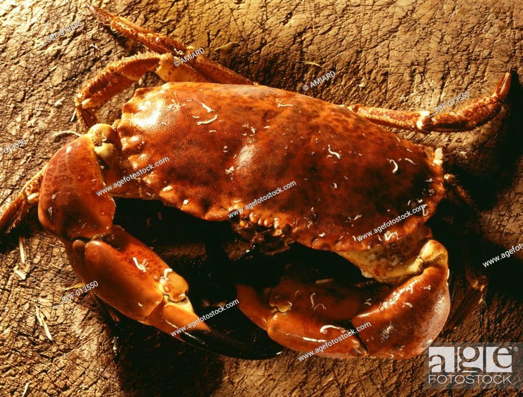 Stock Photo: edible crab.