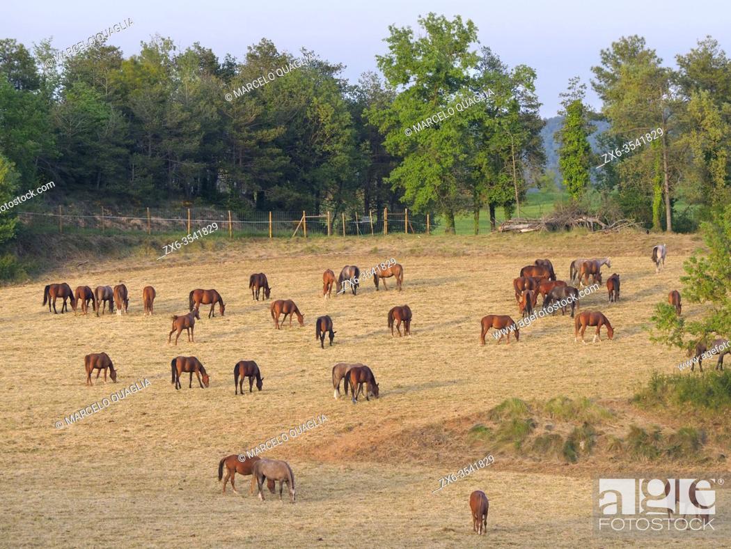 Stock Photo: Horses. Sant Boi de Lluçanès vilage countryside. Lluçanès region, Barcelona province, Catalonia, Spain.