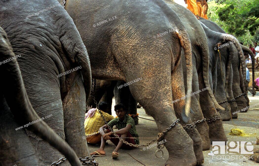 Imagen: THRISSUR POORAM, KERALA, INDIA.