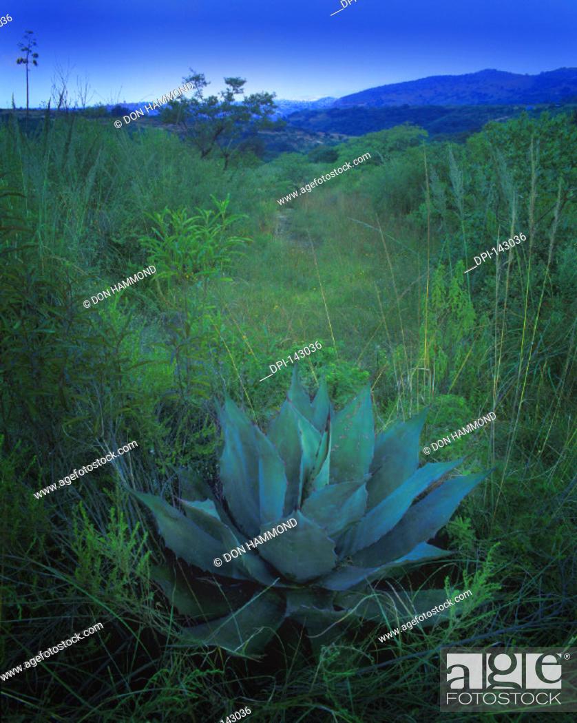 Stock Photo: Plant/Bush.