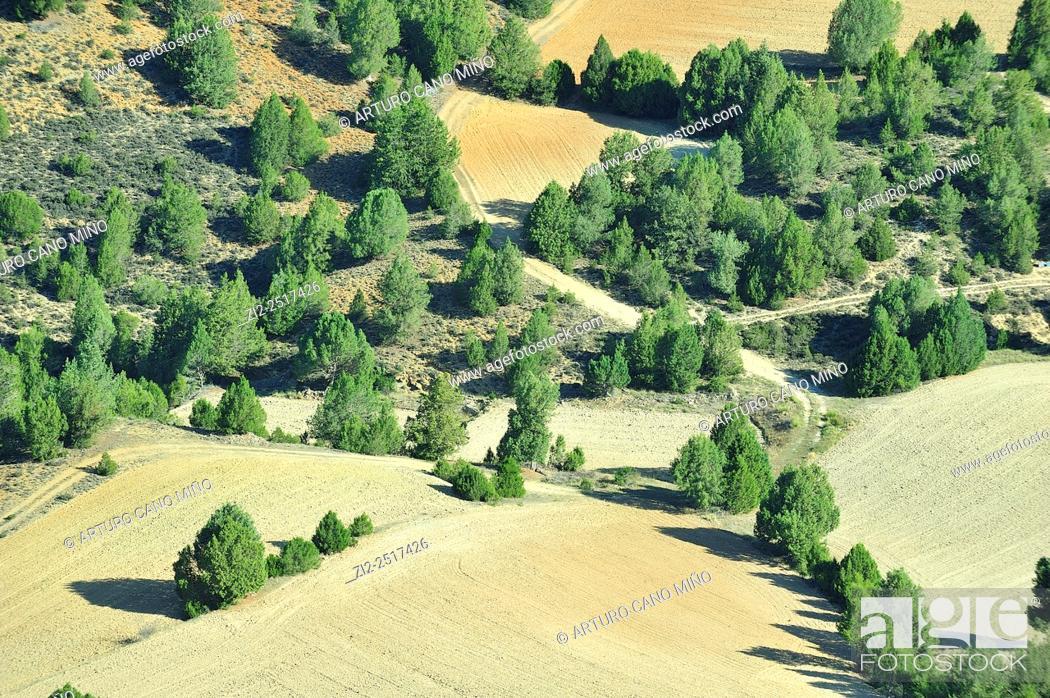 Imagen: Spanish juniper and farm lands. Alto Tajo Natural Park. Huertahernando, Guadalajara, Spain.