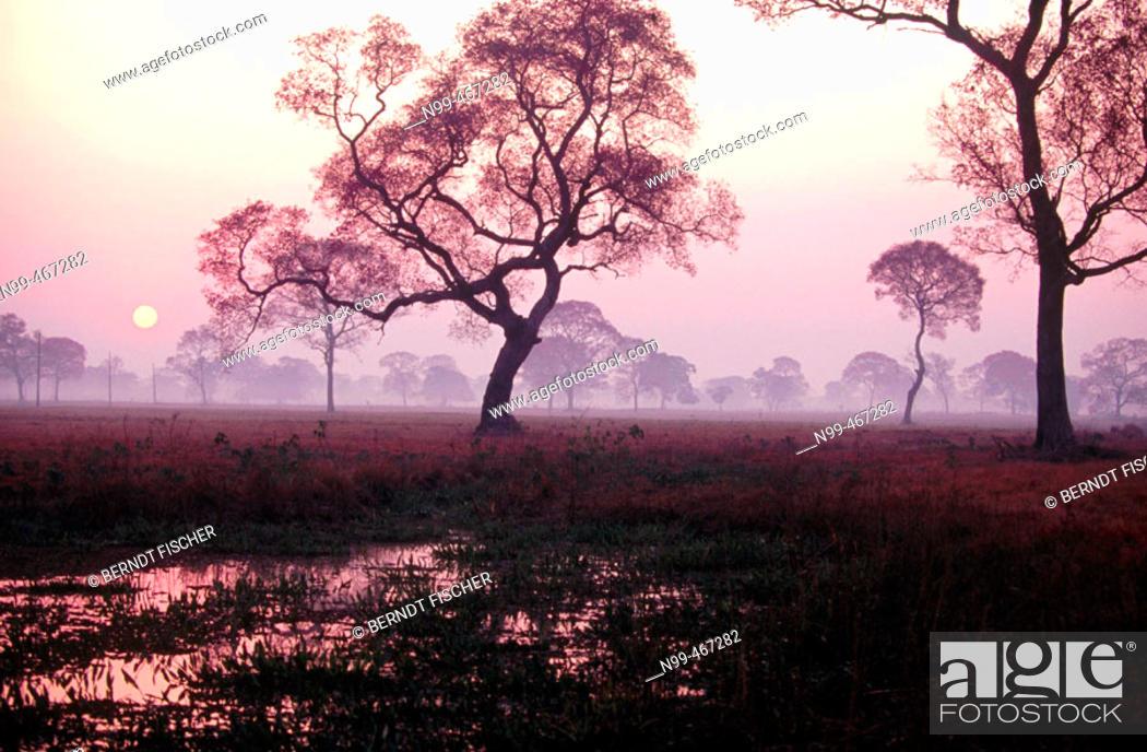 Stock Photo: Water pond in dry pasture trees. Sunrise. Pantanal near Pocone. Mato Grosso. Brazil.