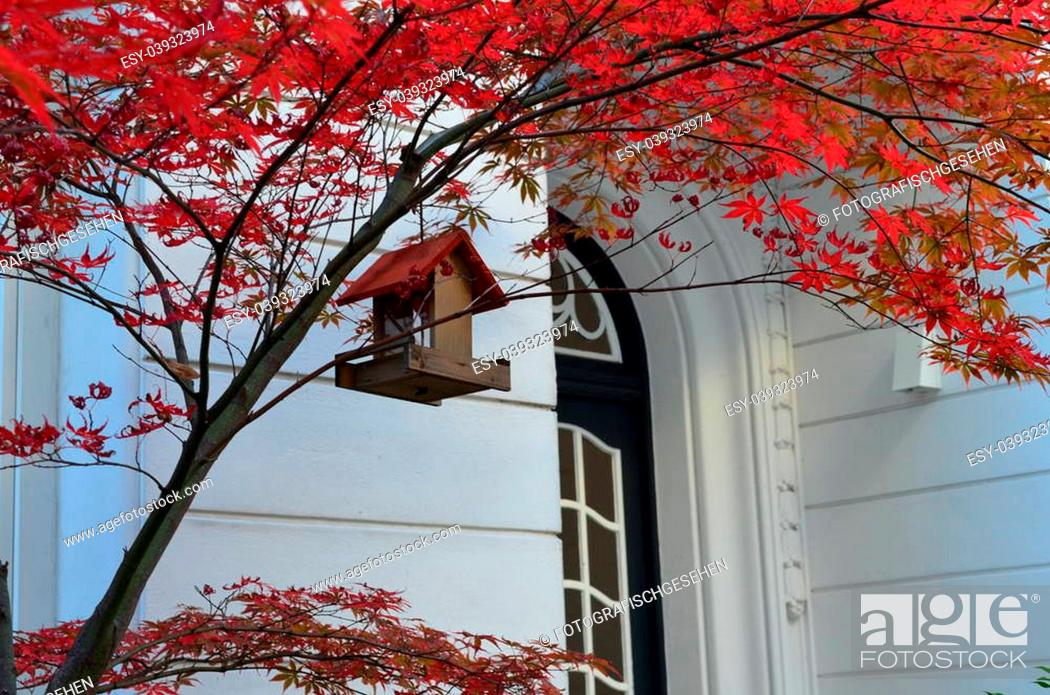 Imagen: Vogelhaeuschen mit rotem Dach im genauso roten Ahorn.