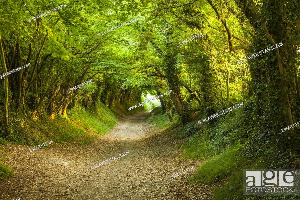 Stock Photo: Tree tunnel near Halnaker village, West Sussex, England.
