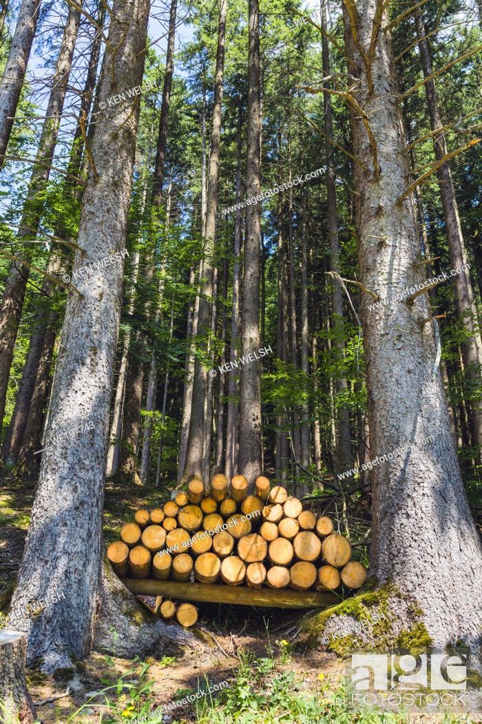 Stock Photo: near Appenzell, Appenzell Innerrhoden Canton, Switzerland. Stacked logs in forest.