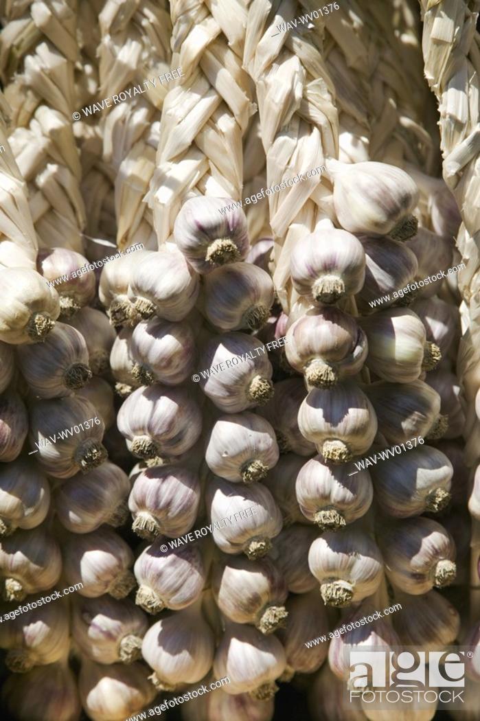 Stock Photo: Garlic cloves, Saturday Market Salt Spring Island, British Columbia, Canada.