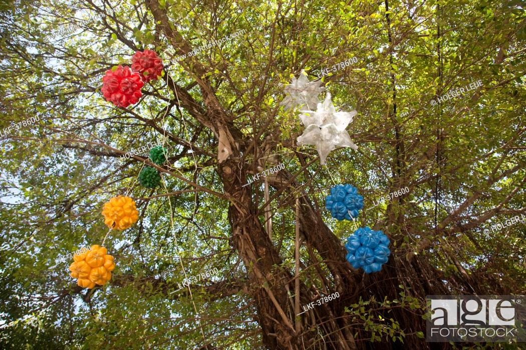 Stock Photo - Christmas decorations made from recycled plastic bottles hang from tree, Olinda, near Recife, Pernambuco, Brazil, South America