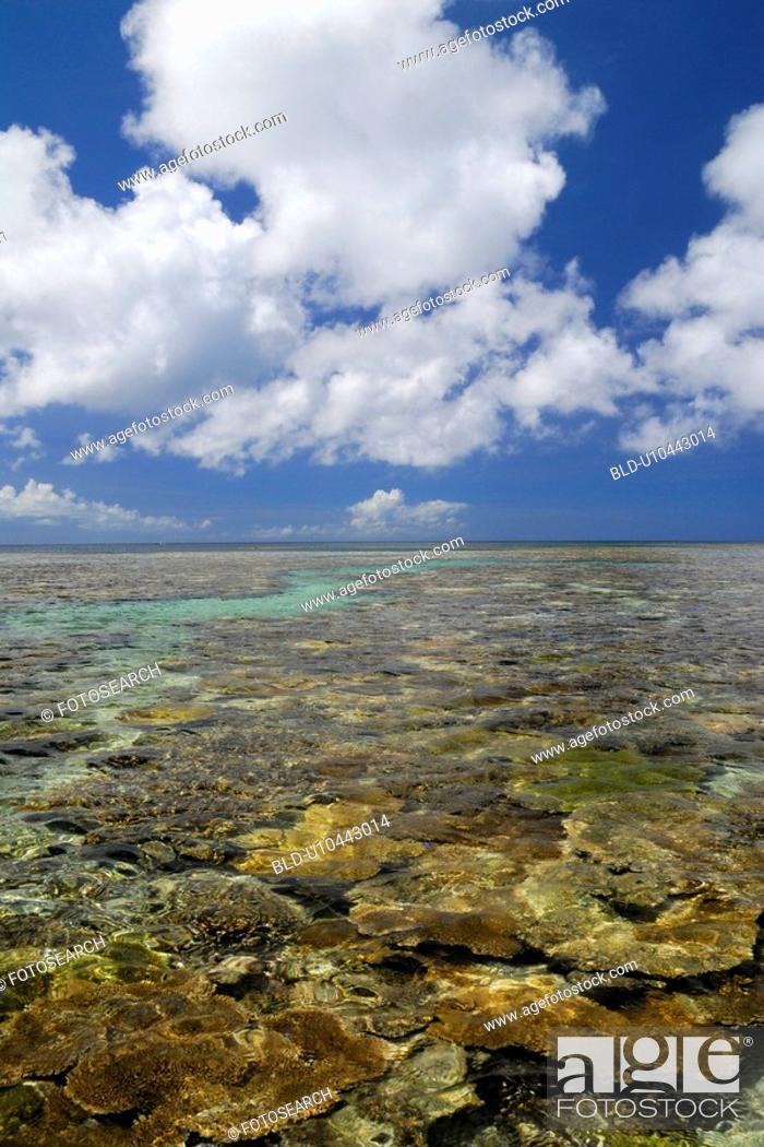 Stock Photo: Coral sea.