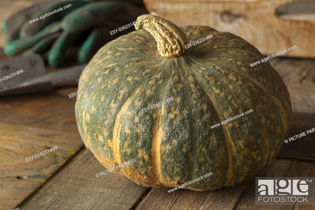 Stock Photo: Fresh picked whole, pumpkin Courge Delica Moretti.