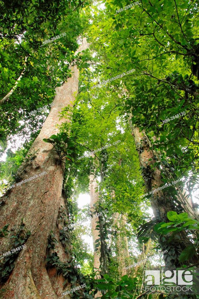 Stock Photo: High jungle Henri Pittier National Park Venezuela.