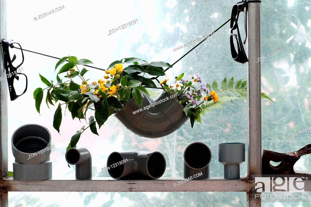 Imagen: Leisure activities with recycle from waste to make flower vase to decoration home, colorful daisy in water pipe on white background.