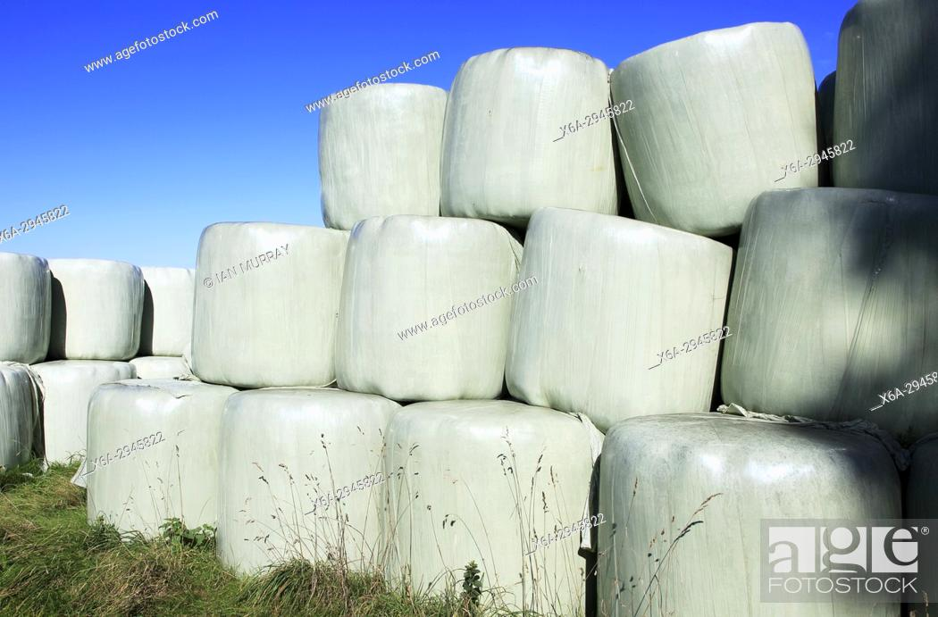 Photo de stock: Silage bags piled up in field against blue sky, Suffolk, England, UK.
