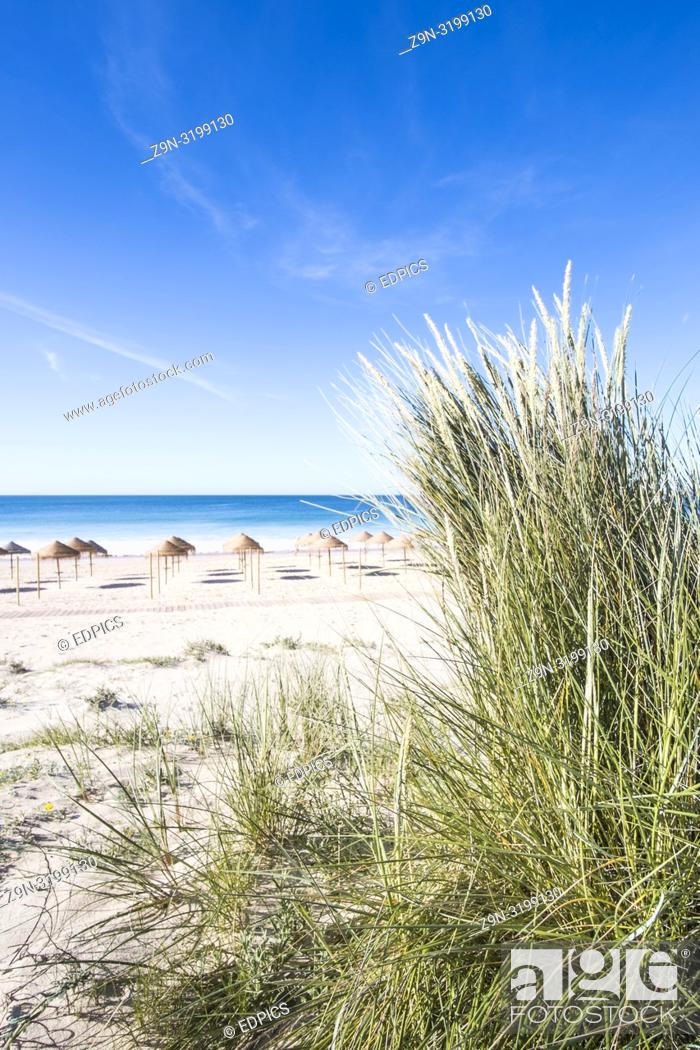 Stock Photo: palm leaf beach umbrellas on a deserted beach seen from a dune, alvor, algarve, portugal.