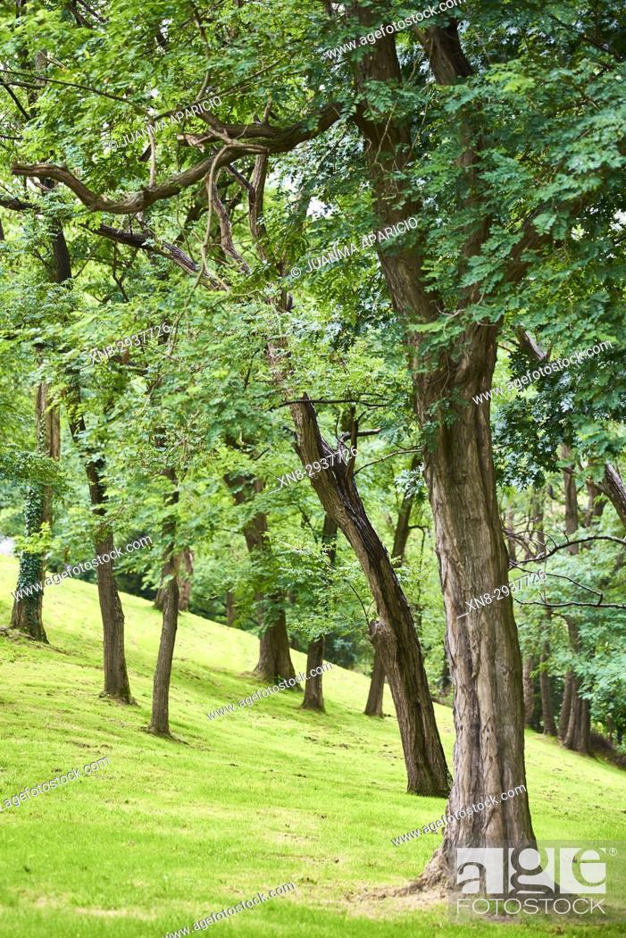 Stock Photo: Artxanda Park, Bilbao, Biscay, Basque Country, Euskadi, Spain, Europe.