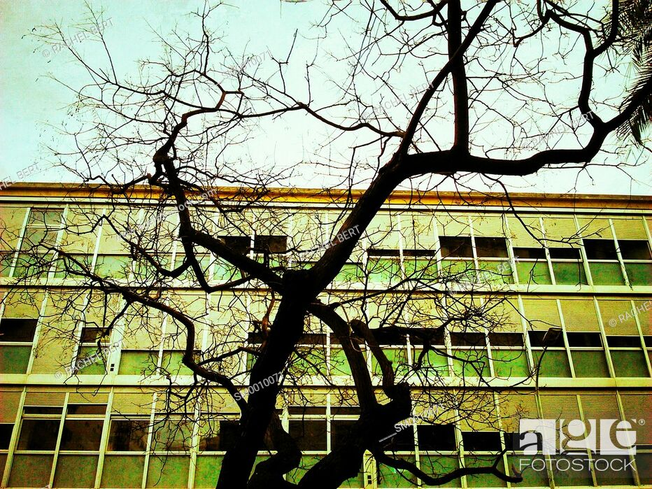 Imagen: Tree structure with building on the background, Barcelona, Catalonia.