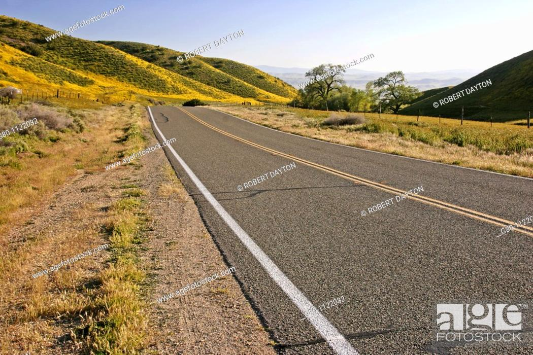 Stock Photo: Wildflowers grow along State Route 58 in California.