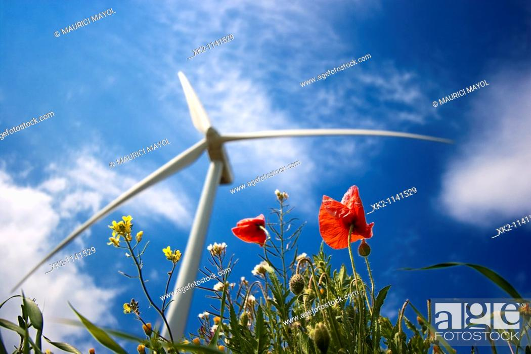 Stock Photo: Wind turbine and poppies.