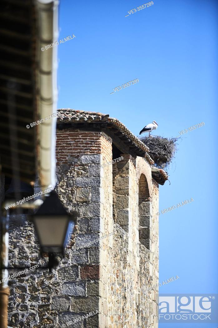 Stock Photo: White stork in his nest over bell tower in Cuacos de Yuste, Extremadura (Spain).