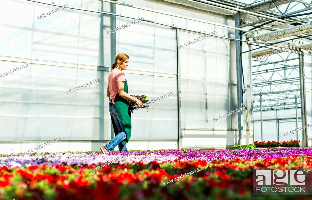 Stock Photo: Woman in nursery carrying tray with flowers.