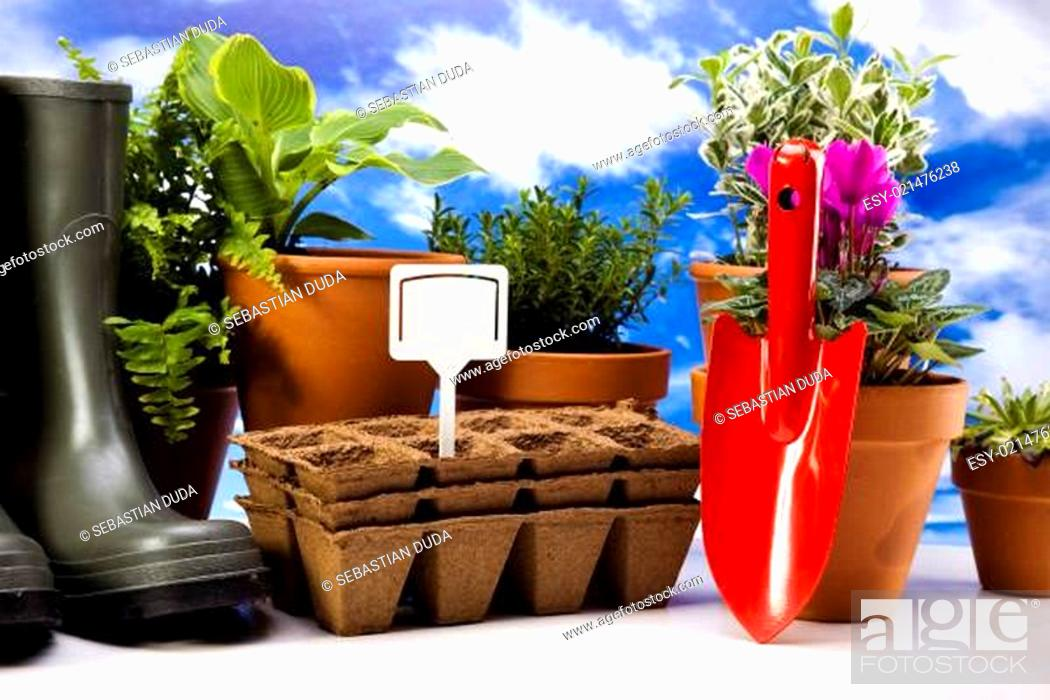 Stock Photo: Flowers and garden tools on blue sky background.