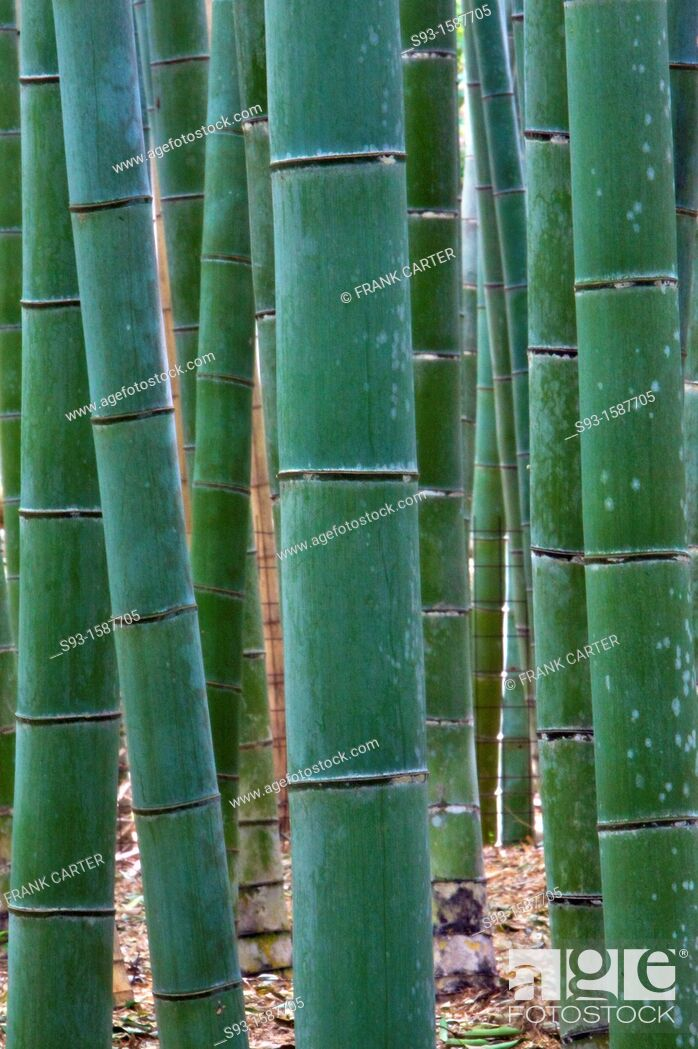 Stock Photo: A pleasing shot of bamboo in the Sagano area of Kyoto.