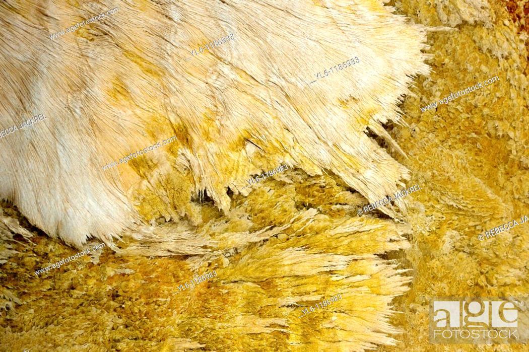 Stock Photo: North America, USA, Wyoming, Yellowstone National Park  Sulfur-oxidizing filamentous bacteria.