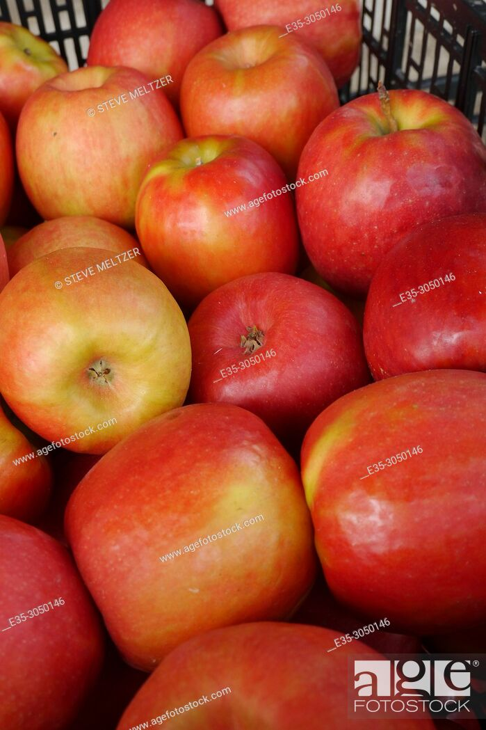Stock Photo: A carton of red apples.