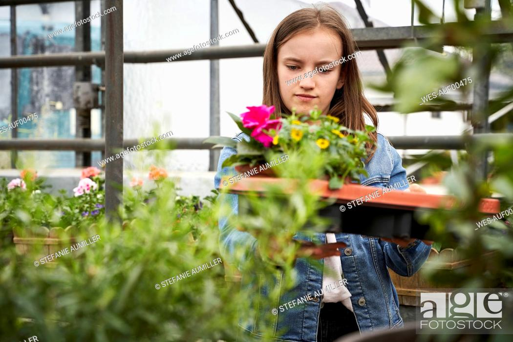 Stock Photo: Girl tending to flowers in a greenhouse.