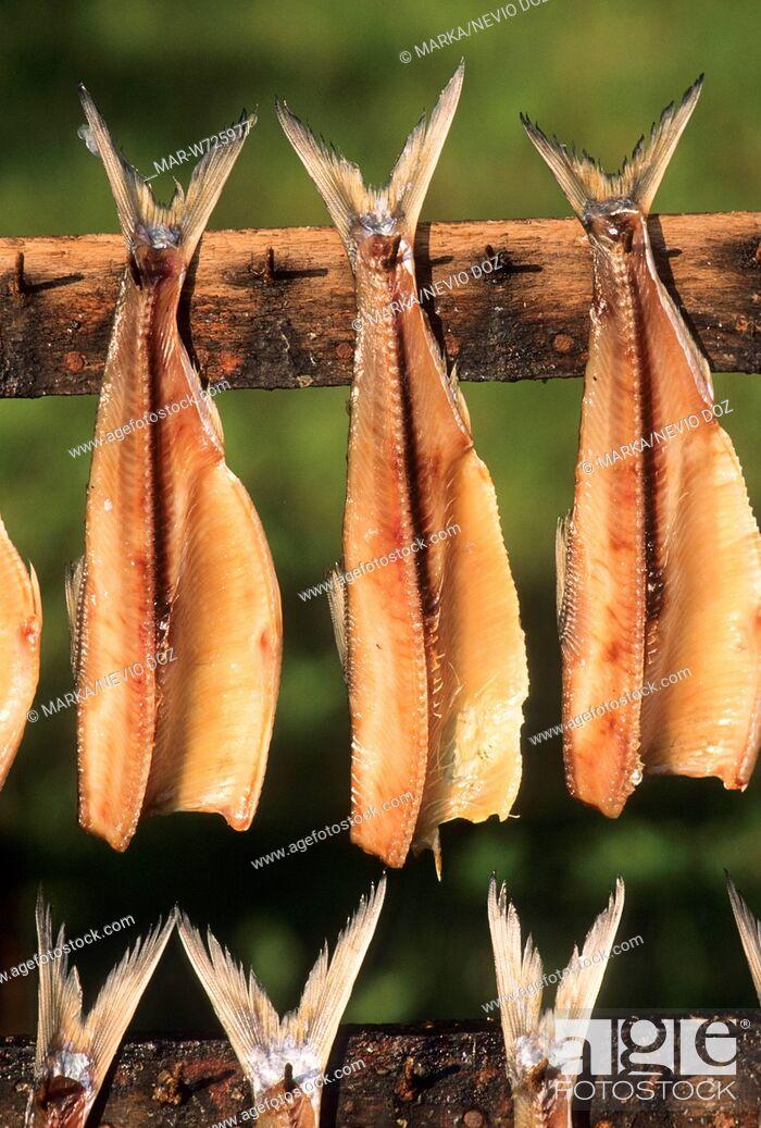 Imagen: essiccazione di agoni, mandello del lario.