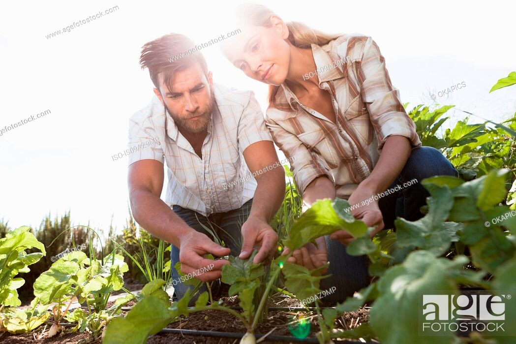 Stock Photo: Mature couple tending to plants in garden.
