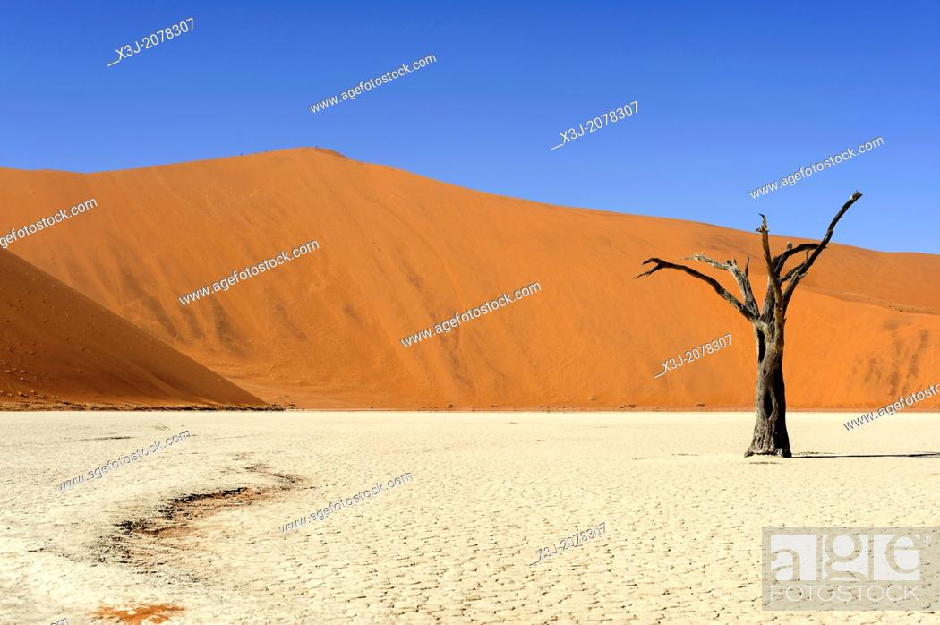 Stock Photo: Silhouette of a dead tree in the Deadvlei, Namib Naukluft National Park, Sossusvlei, Namibia, Africa.