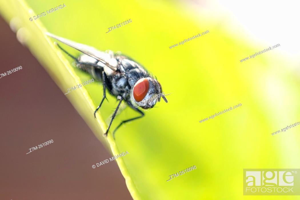 Imagen: Fly. Macro. Spain.
