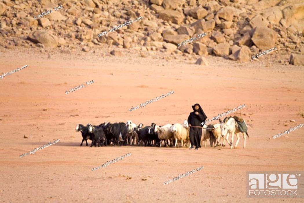 Stock Photo: Jordan, Bedouin shepherdess.