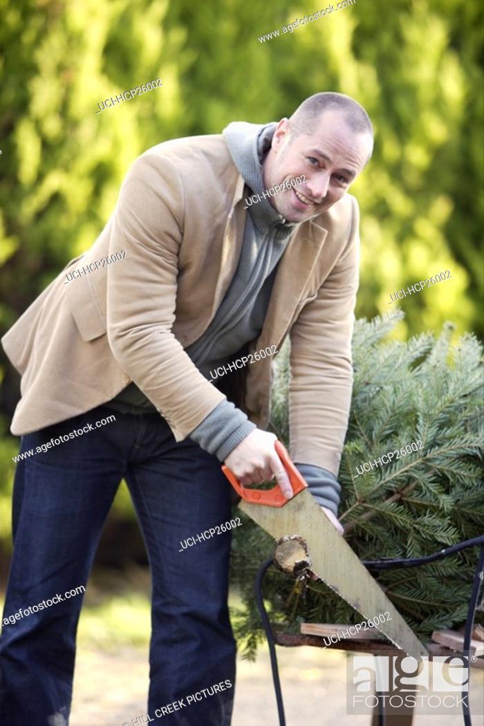 Stock Photo: Man chopping down a Christmas tree.