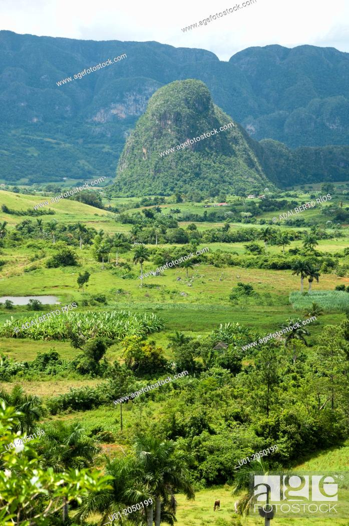 Stock Photo: Valle de Viñales, Pinar del Rio, Cuba.