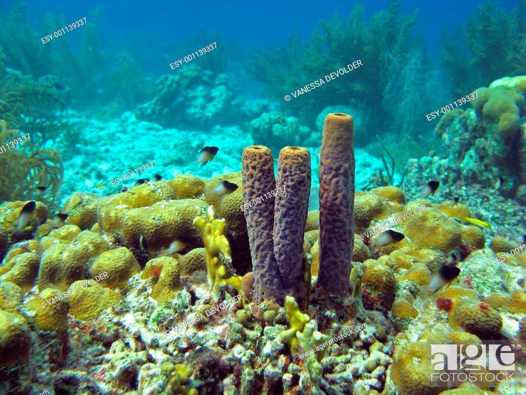 Imagen: Underwater landscape with sponges in Bonaire, Dutch Antilles, Caribbean sea.