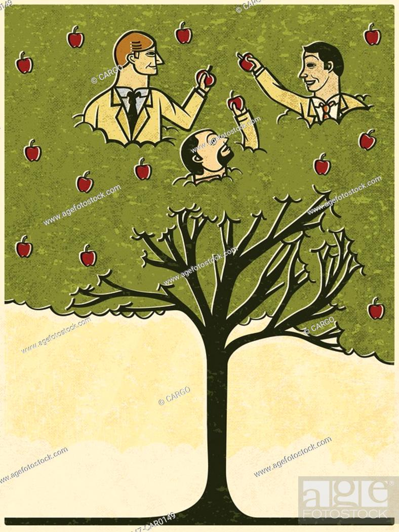 Stock Photo: Three men picking apples from a tree.