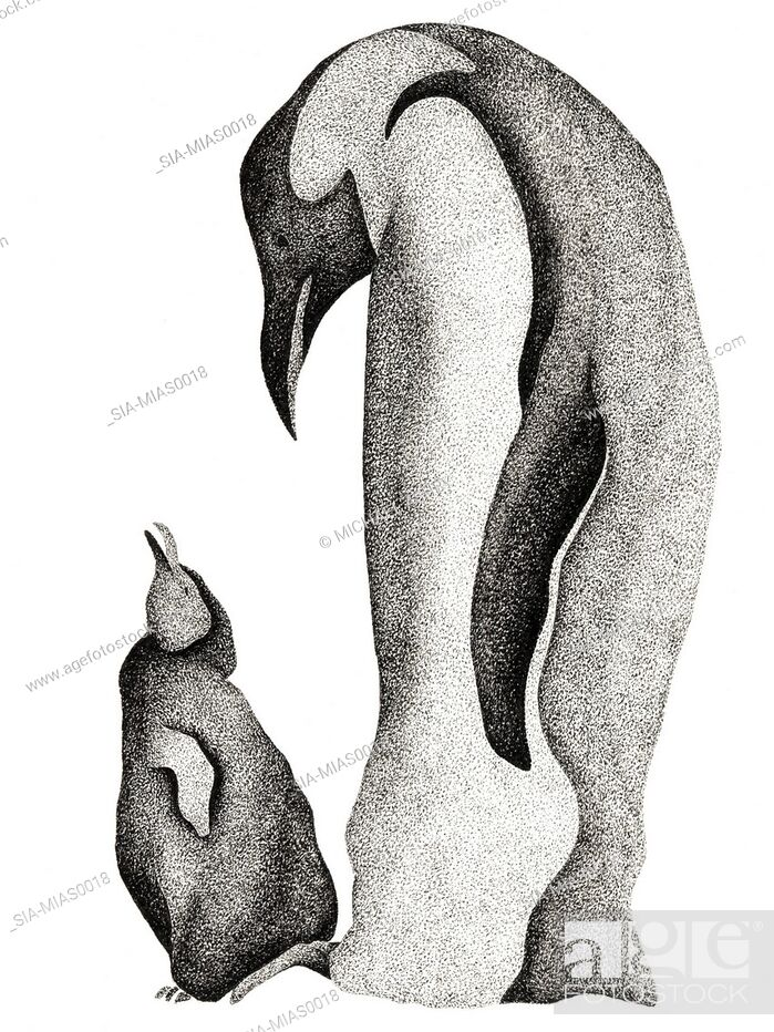 Imagen: View of two penguins.